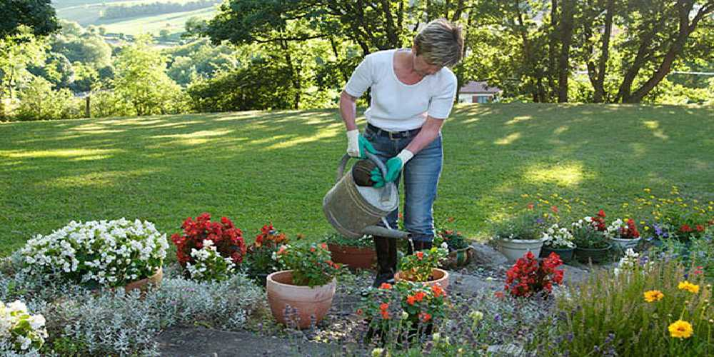 A Lady watering the flowers in the garden and also applied the Pest Control Products for the growth.